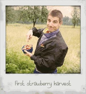 First strawberry harvest