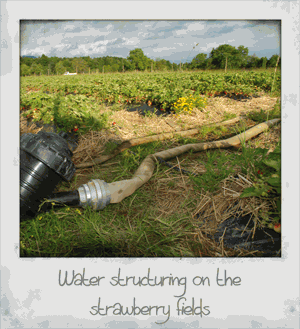 Water Structuring on the Strawberry Fields